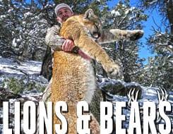 lionsbears